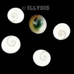 Oeil de Sainte Lucie - Lot de 5 pièces - 1-2cm
